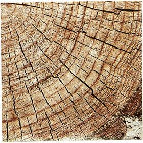 Cut Timber Beverage Napkins (16)