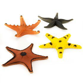 Starfish (Assorted) (12)